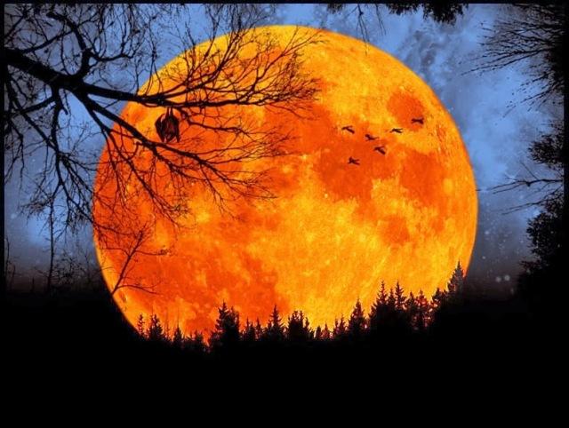 harvest_moon