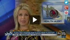 Health_Alert_Fleas_Test_Positive_for_Plague_Near_Flagstaff_Arizona__186766