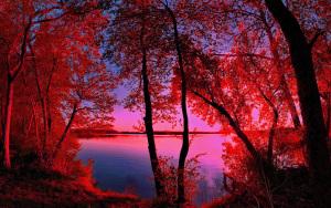 beautiful-earth-sunset-254072