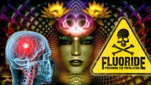 pineal gland1